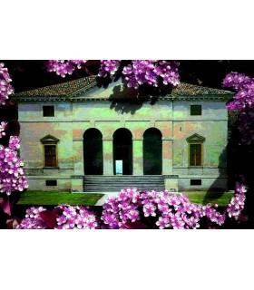 FLOWERED PALLADIUM