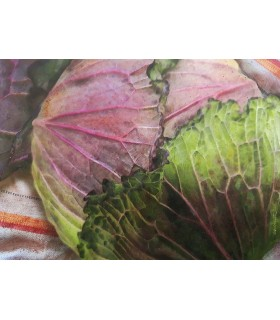 CABBAGE ON THE TABLECLOTH